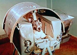 Laika in Sputnik-2 compartment